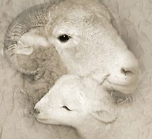 Ewe and Her Lamb by beatrice11