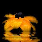 Rudbeckia flower by Joyce Knorz