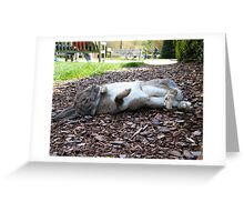 Larry the Rabbit Greeting Card