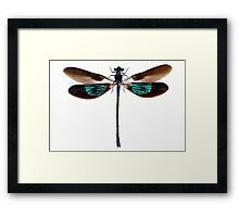 Dragonfly with green and brown wings Framed Print