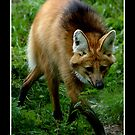 On the prowl by Derek Donnelly