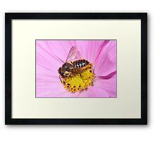 Leaf Cutter Bee Framed Print