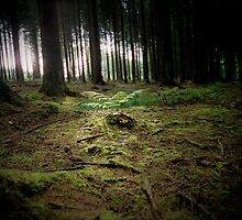 Green fern - in fancy woods by rince77