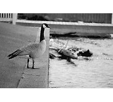Goose (Award Winning Photo!) Photographic Print