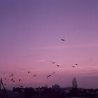 flock of birds - sunrise by rince77