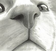 Nosy Cat by Drawing