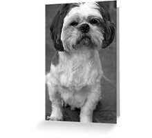 The Tobster  Greeting Card