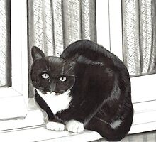 Tuxedo Cat Sitting on a Windowsill by Drawing