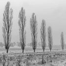 Winter Trees - Uralla NSW Australia by Beth  Wode