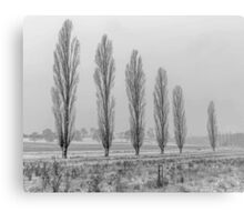 Winter Trees - Uralla NSW Australia Canvas Print