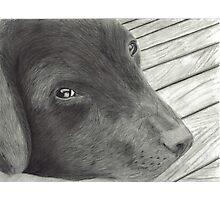 Labrador Resting on Wooden Deck Photographic Print