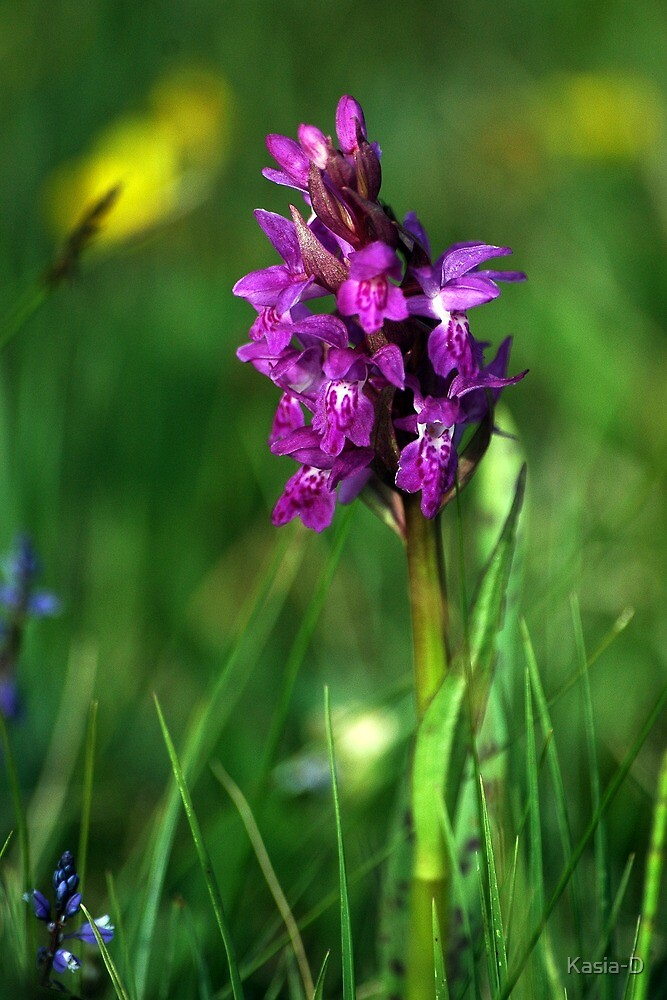 Wild Orchid by Kasia-D