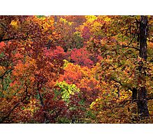 Heart Of Art,  In The Ozark Forest Photographic Print