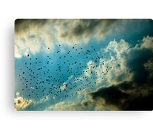 OnePhotoPerDay Series: 240 by C. Canvas Print