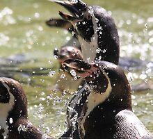 African Penguin (Spheniscus demersus) by DutchLumix