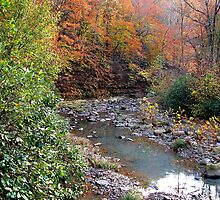 Autumn On Greesy Creek,  Combs  NW Arkansas by NatureGreeting Cards ©ccwri