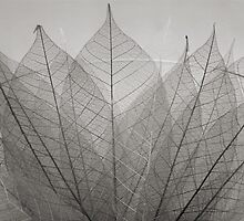 skeleton leaves by Dave Milnes