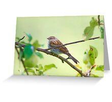 Summer Sparrow Friend Greeting Card