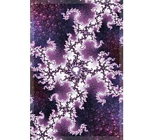 Sakura Trees Photographic Print