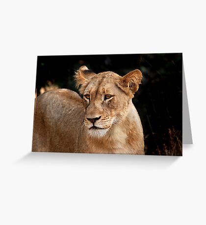 Looking gorgeous Greeting Card