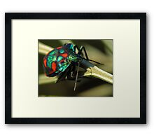 Dressed for Christmas Framed Print