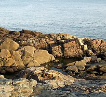 Maine Tide Pools by photosbycoleen