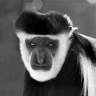 Old Man Colobus by Marion  Cullen