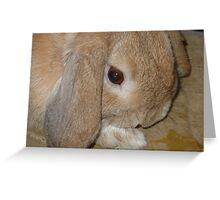 Dwarf Lop Eared Rabbit  Greeting Card