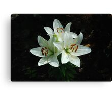 Eye-liner Lilies 2010 Canvas Print