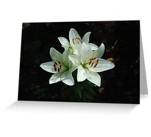 Eye-liner Lilies 2010 Greeting Card