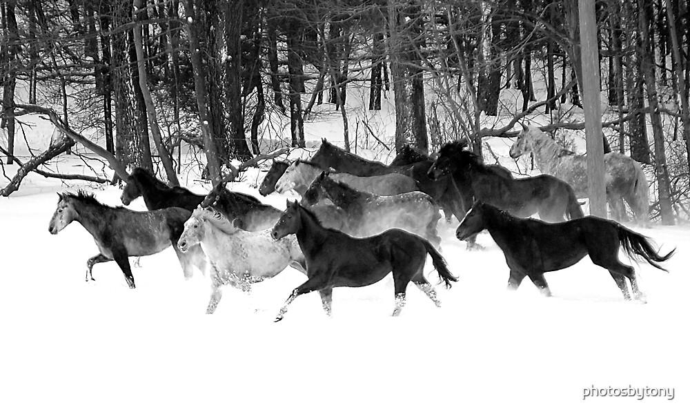 After the Blizzard 18 B&W by photosbytony