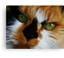 Lovely Lucy Long Canvas Print