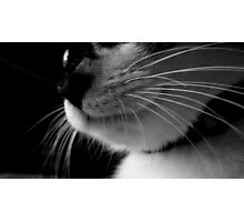 Kitten Whiskers Photographic Print