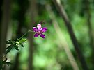 A Little Fushia Among the Green by Lucinda Walter