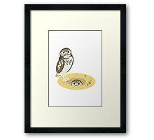 Burrowing Owls Framed Print