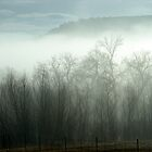 Foggy Day in Cottonwood by Darlene Wilson