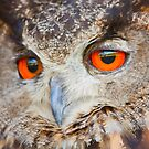Look into my eyes - Eureasian Eagle Owl by Josef Pittner
