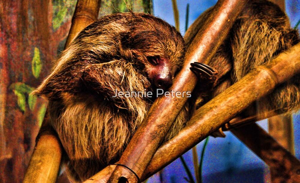 Sloth by Jeannie Peters