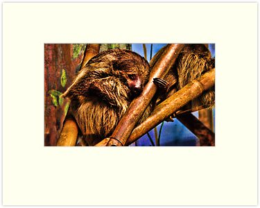 Sloth by Jeannie Peters
