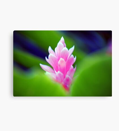 Wild Ginger Canvas Print