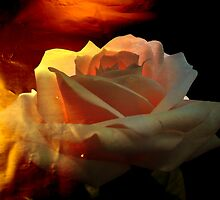 Rose for You. by Vitta