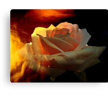 Rose for You. Canvas Print