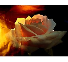 Rose for You. Photographic Print