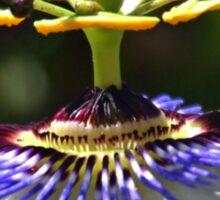 Passion Flower,  Sticker