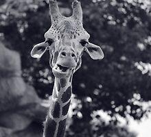 GIraffe at the Detroit Zoo by Jessica Farkas