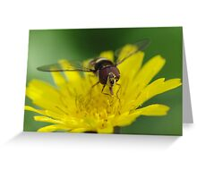 Hungry Hoverfly Greeting Card