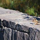 Chipmunk by Jennifer Suttle