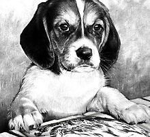 Artistic Puppy by Brandie1