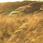 Country Life by Kahlia Huddleston