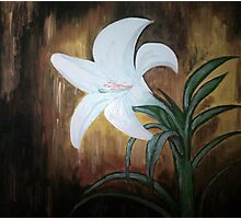 Lonely Lily Photographic Print